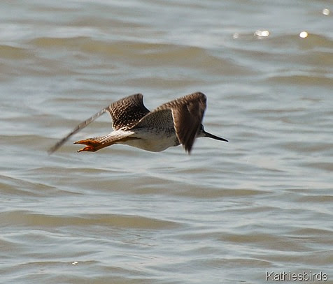 1. Yellowlegs-kab