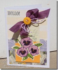 Pansy Greetings by Amy Duff