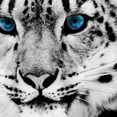 Snow Leopard Live Wallpaper