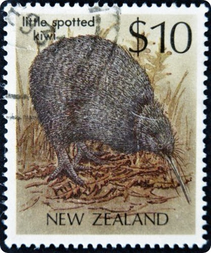 kiwi brunostamp
