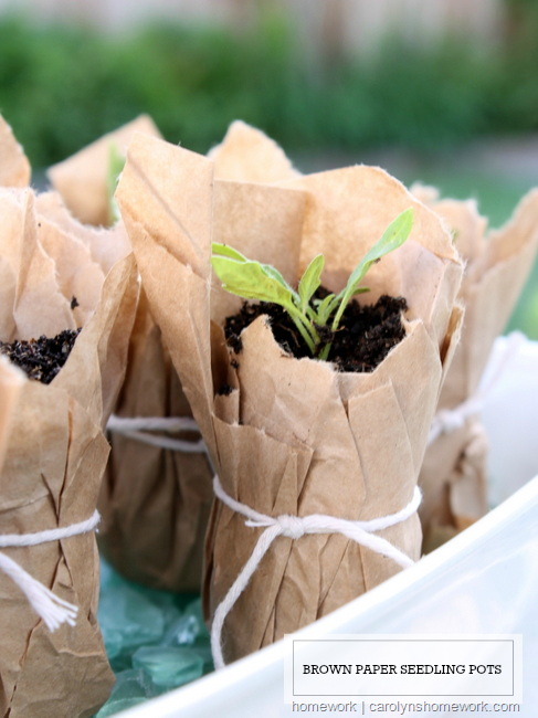 Brown Paper  Seedling Pots via homework | carolynshomework.com