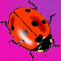 Cute Ladybugs Live Wallpaper logo
