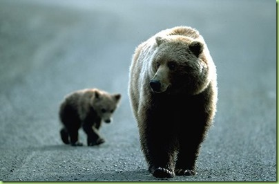 grizzly-bear-with-little-cub_5279