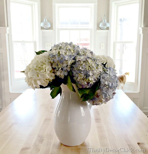 hydrangeas in pitcher