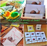 Molluscs: The Study of Snails (Part Two)