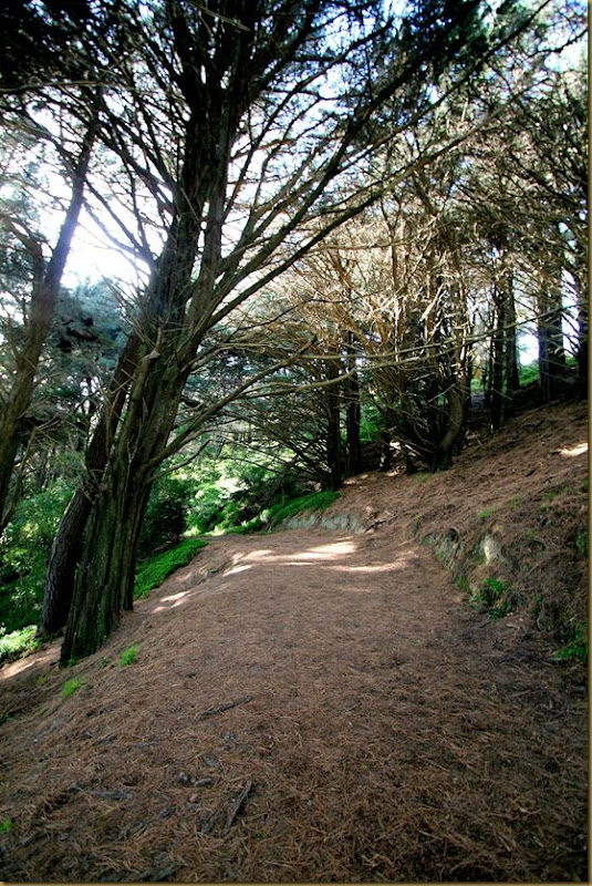 Nazgul road Mount Victoria Wellington
