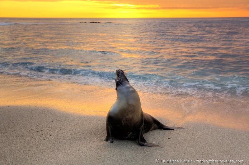 sea lion sunset galapagos