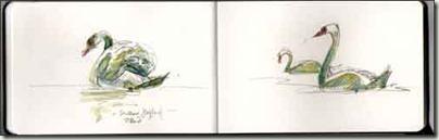 swans 1
