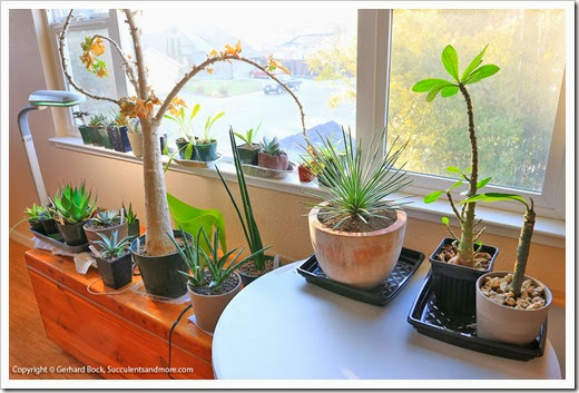140113_indoor_plants_012