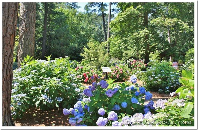 Hydrangea Garden (800x518)