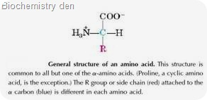 Protein Fundamental molecules are Amino acids