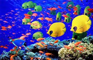 Immersioni Subacquee Maldive