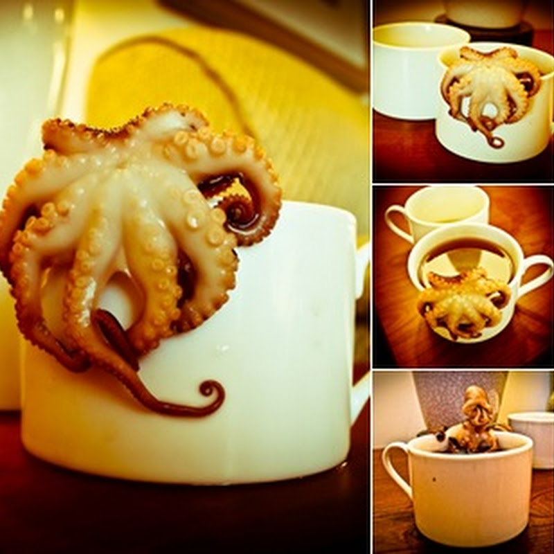 Octopus in My Coffee