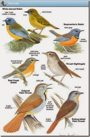 Roberts Birds App For Iphone