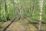 renaturiert, Birkenwald