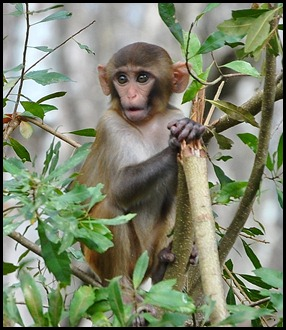 08 - Animals - Monkey 3