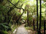 South Island - Franz Josef Gacier - Rainforest