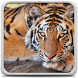 Tiger Live .. file APK for Gaming PC/PS3/PS4 Smart TV