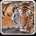 Tigre Fond D'écran Animé icon