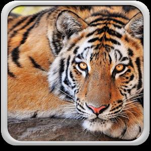 Τίγρη Εικονες Για Φοντο APK