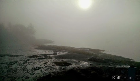 4. foggy cove