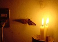 Moth flame