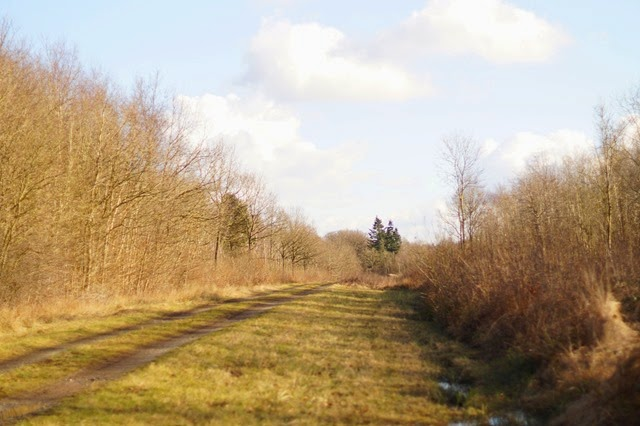 Foxley Wood in winter sunshin