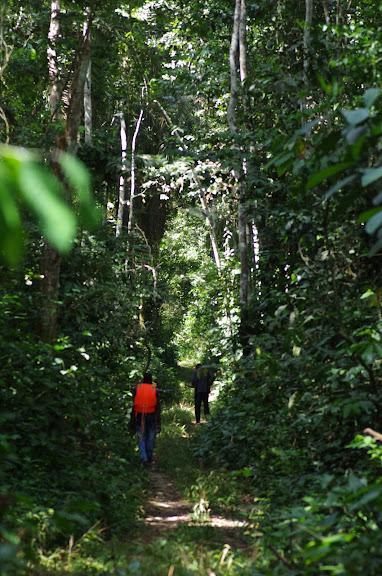 Dans la forêt au sud d'Ebogo (Cameroun), 8 avril 2012. Photo : J.-M. Gayman
