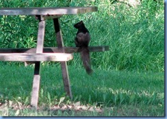 4913 Laurel Creek Conservation Area - evening walk - squirrel on picnic table