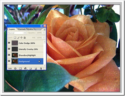 Orange_Rose_Screenshot