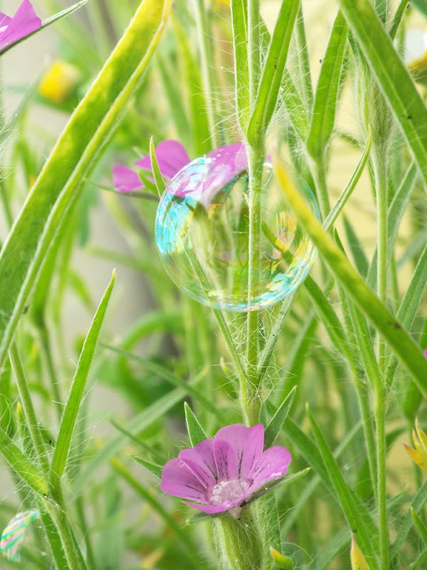 wildflowers bubbles