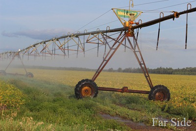 irrigator in the bean field
