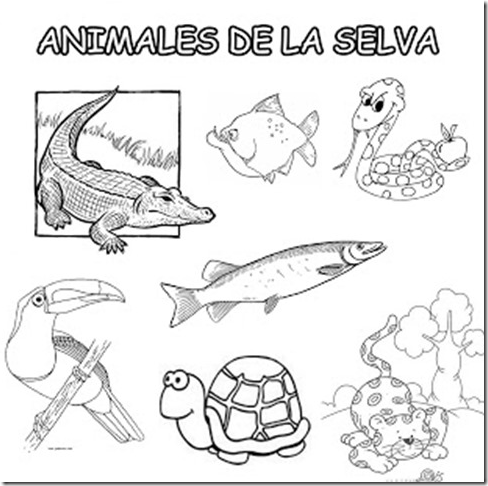 Dibujos De Animales De La Costa Para Colorear Imagui