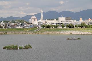 ビオトープ?を望む(向こうに見えるのは大阪狭山市市役所と大平和祈念塔)