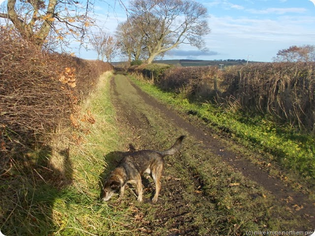 bruno sniffs out a footpath issue
