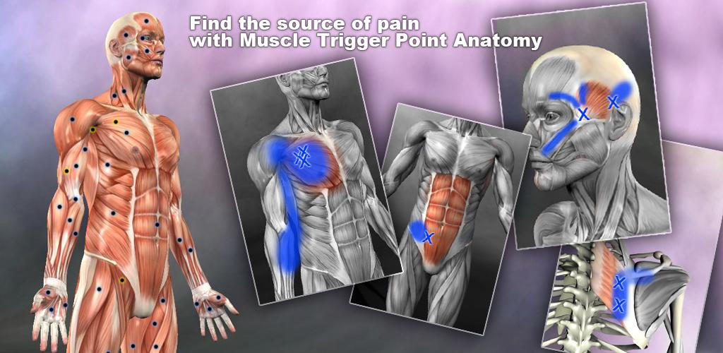 Muscle Trigger Point Anatomy 2.4.1 Apk Download - com.real.bodywork ...