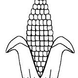 colcorn1.jpg