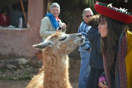Valea sacra a incasilor: Lama in Chinchero