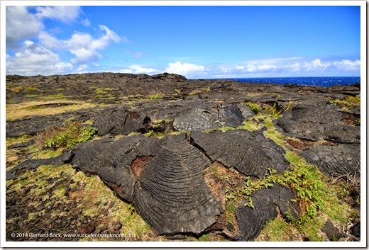 140724_HawaiiVolcanoesNP_0077