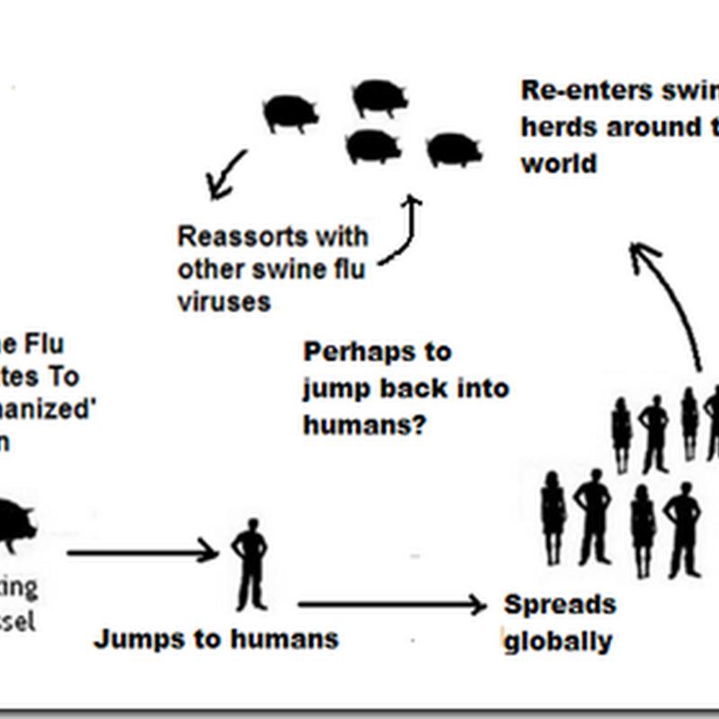 Avian Flu Diary Eid Journal Influenza A Viruses Of Human Origin In Swine Brazil