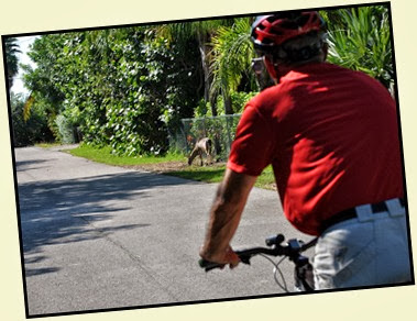 04c4 - Things we did - Big Pine Key bike ride to see the protected minature Key Deer
