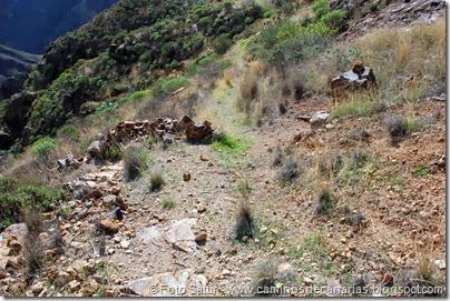 7041 Cruz Tejeda-Artenara-Guardaya(El camino en el Lomo de la Era)