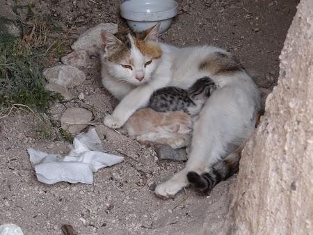 15. Pisica cu puii.JPG