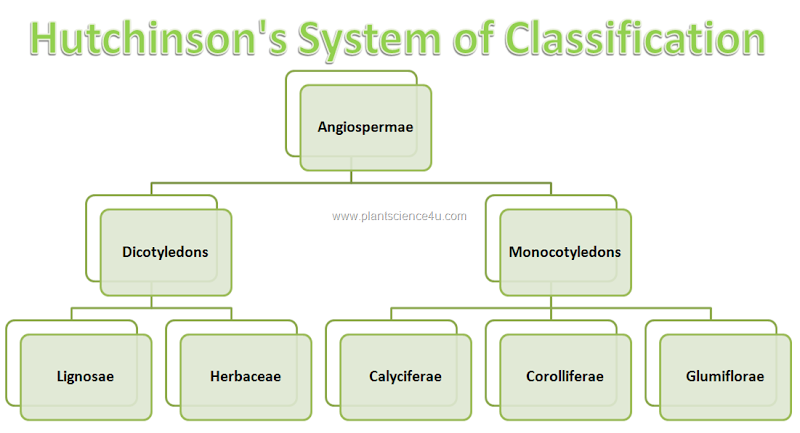 Hutchinson's System of Classification