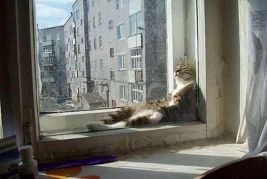 Cats_relax_02