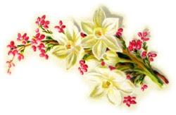 http://lh6.ggpht.com/-Q22ugzr1IWQ/TRPWTN0iKqI/AAAAAAAAFGE/5myThX82j2U/s250/spray-flowers-left.jpg