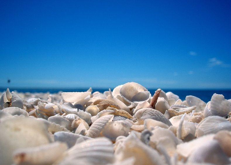 shell-beach-australia-6