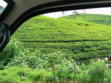 Imagini Sri Lanka: plantatii de ceai