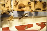 Schildkröte, Kiwi, Pinguin, Haubentaucher ...