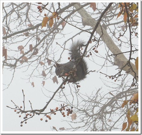 111220_fog_squirrel